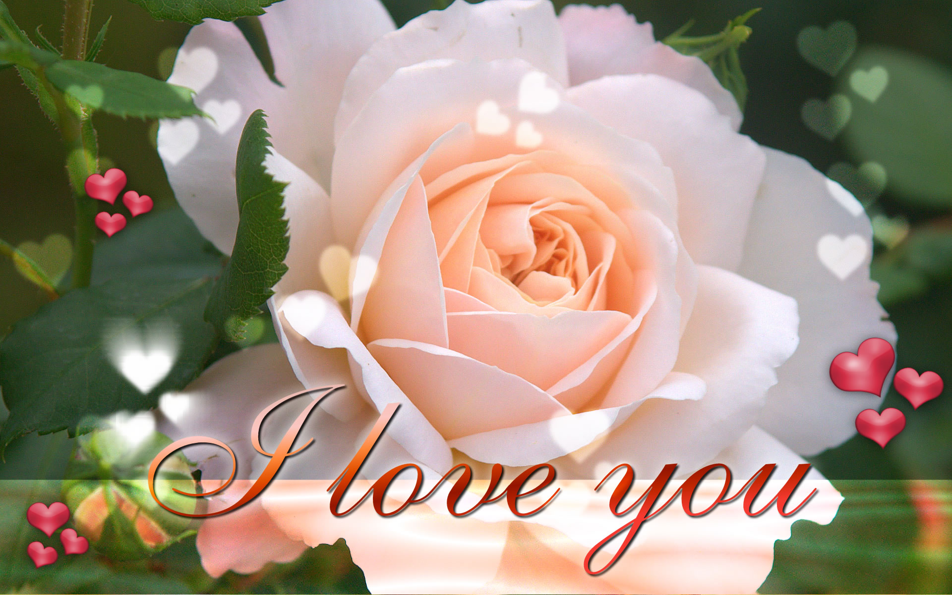 Love You Wallpaper Full Hd : I Love You Hd Wallpaper Download cool HD wallpapers here.